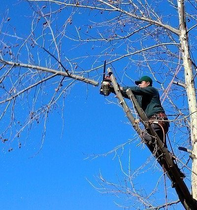 Importance Of Periodical Professional Maintenance Of Trees