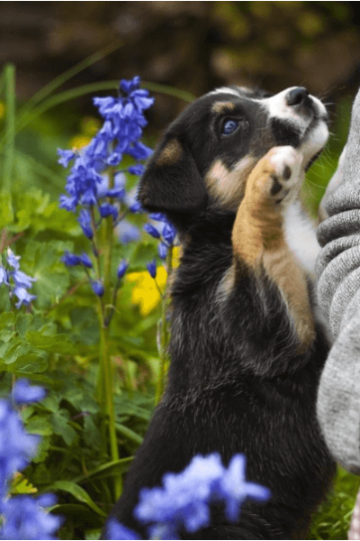 Keeping Pet-Friendly Plants in Your Home and Garden