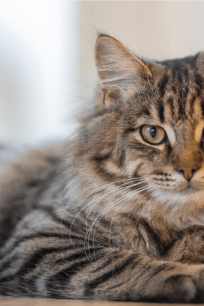 8 Feline Health Facts You Didn't Know