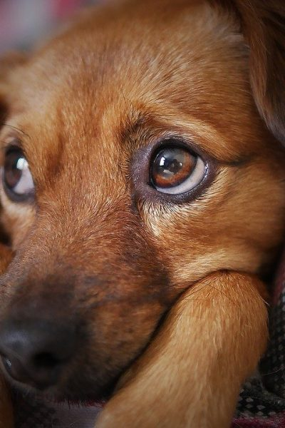 4 Things Vets Don't Tell You About High-quality Dog Food