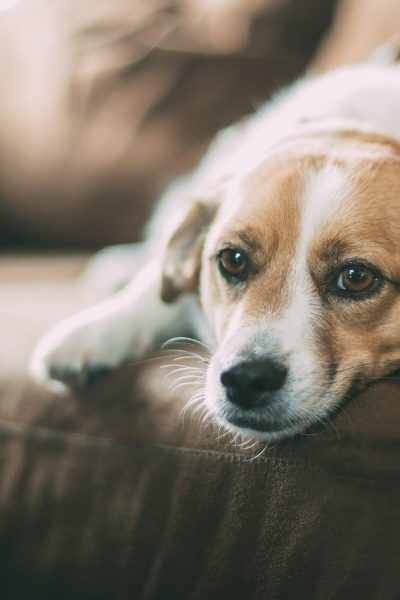 5 Tips for Keeping Your Home Clean When You have a Dog