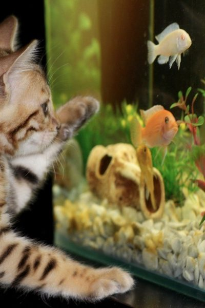How to Choose the Right Filtration System for Your Aquarium