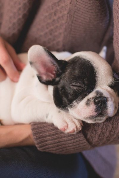 What is the True Cost of Owning a Pet?