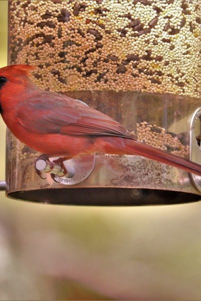 Backyard Bird Feeding Tips