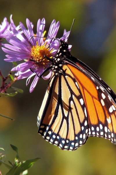 Butterfly Gardening – A Beginner's Guide