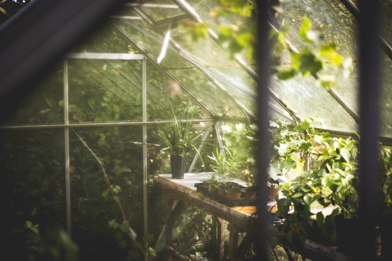 3 Ways to Improve Your Greenhouse Gardening