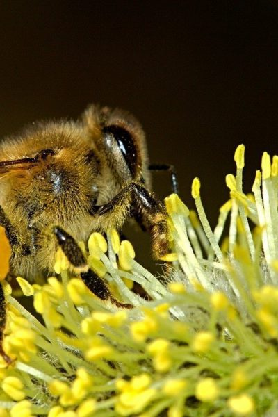 How to Prepare a Bee Garden
