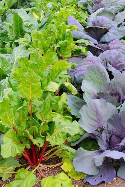 The Best Plants For A Winter Vegetable Garden
