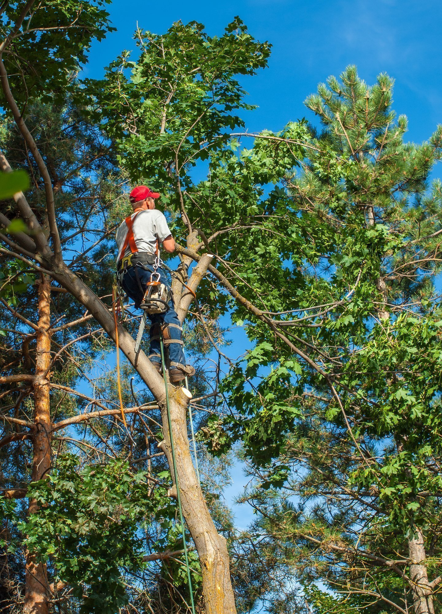 Tree Removal Services Raleigh