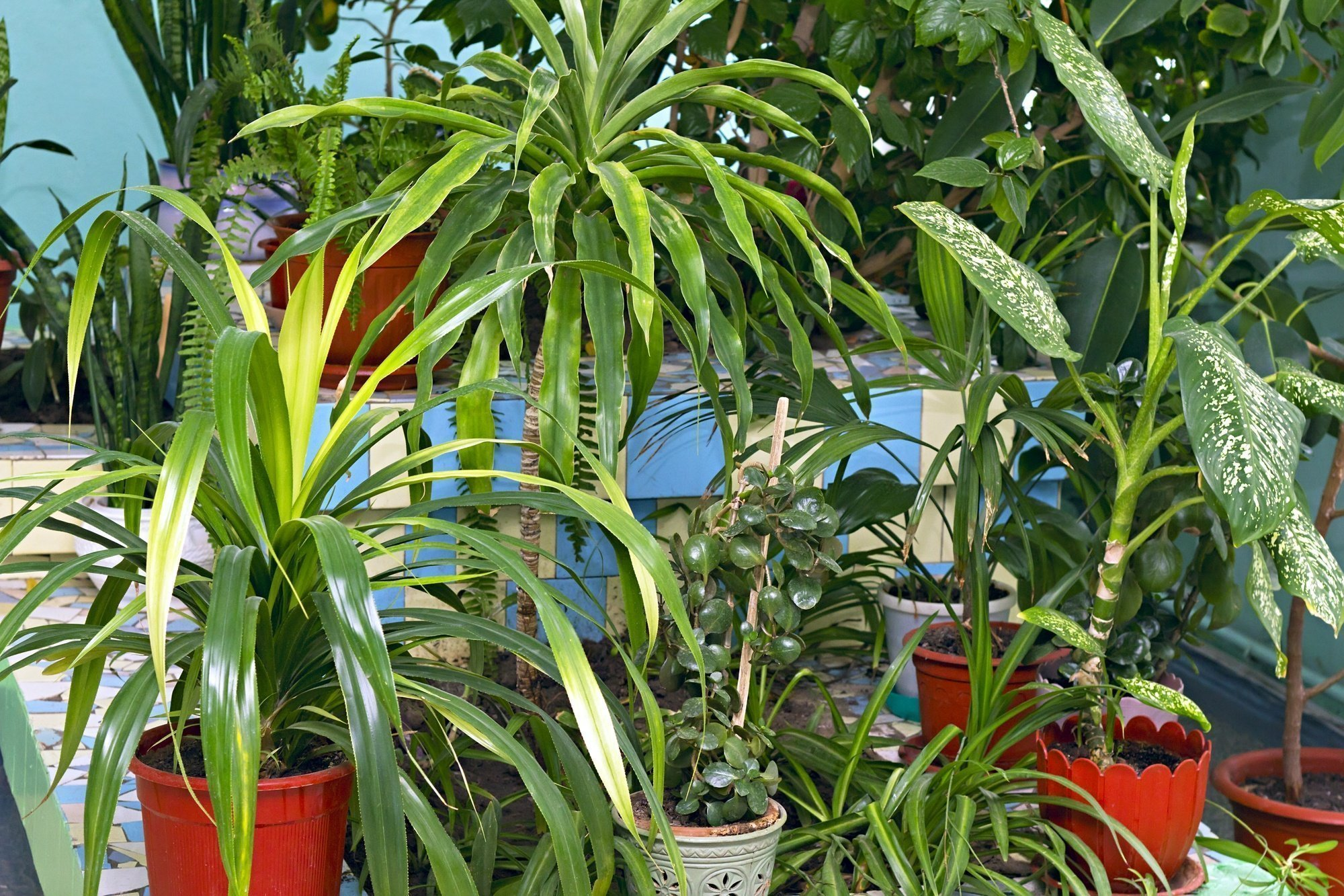 How to Move and Pack Household Plants Guide
