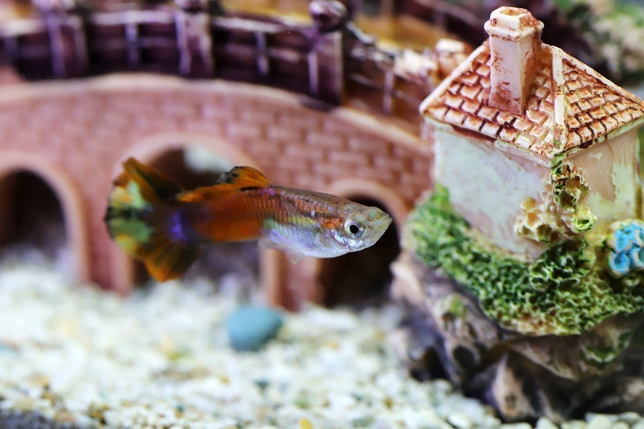 Setting up Your First Fish Tank