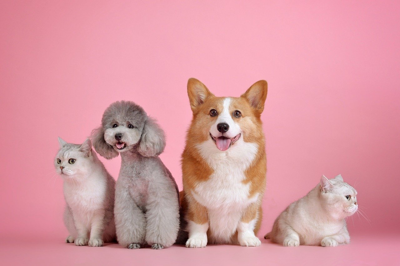 The Necessity of Pet Insurance