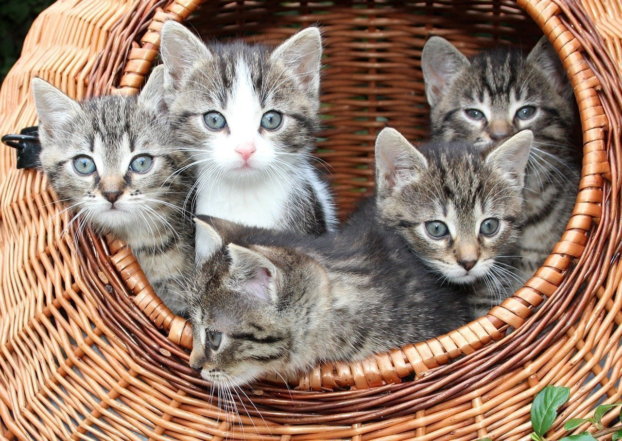 Things to Prepare for First-Time Cat Owners (1)
