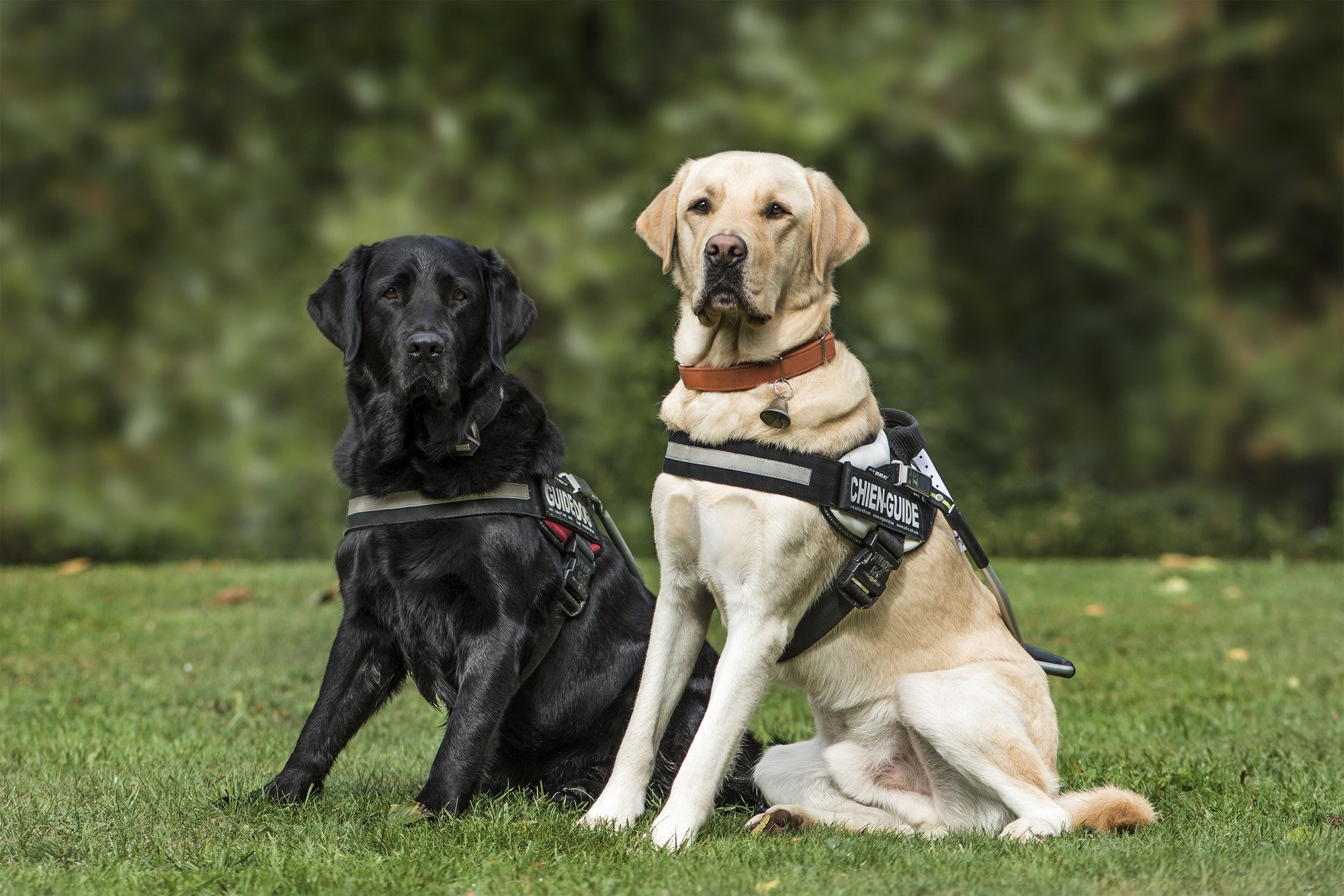 How the Therapy and Service Animals
