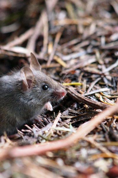 Why Get Pest Control in Maple Ridge