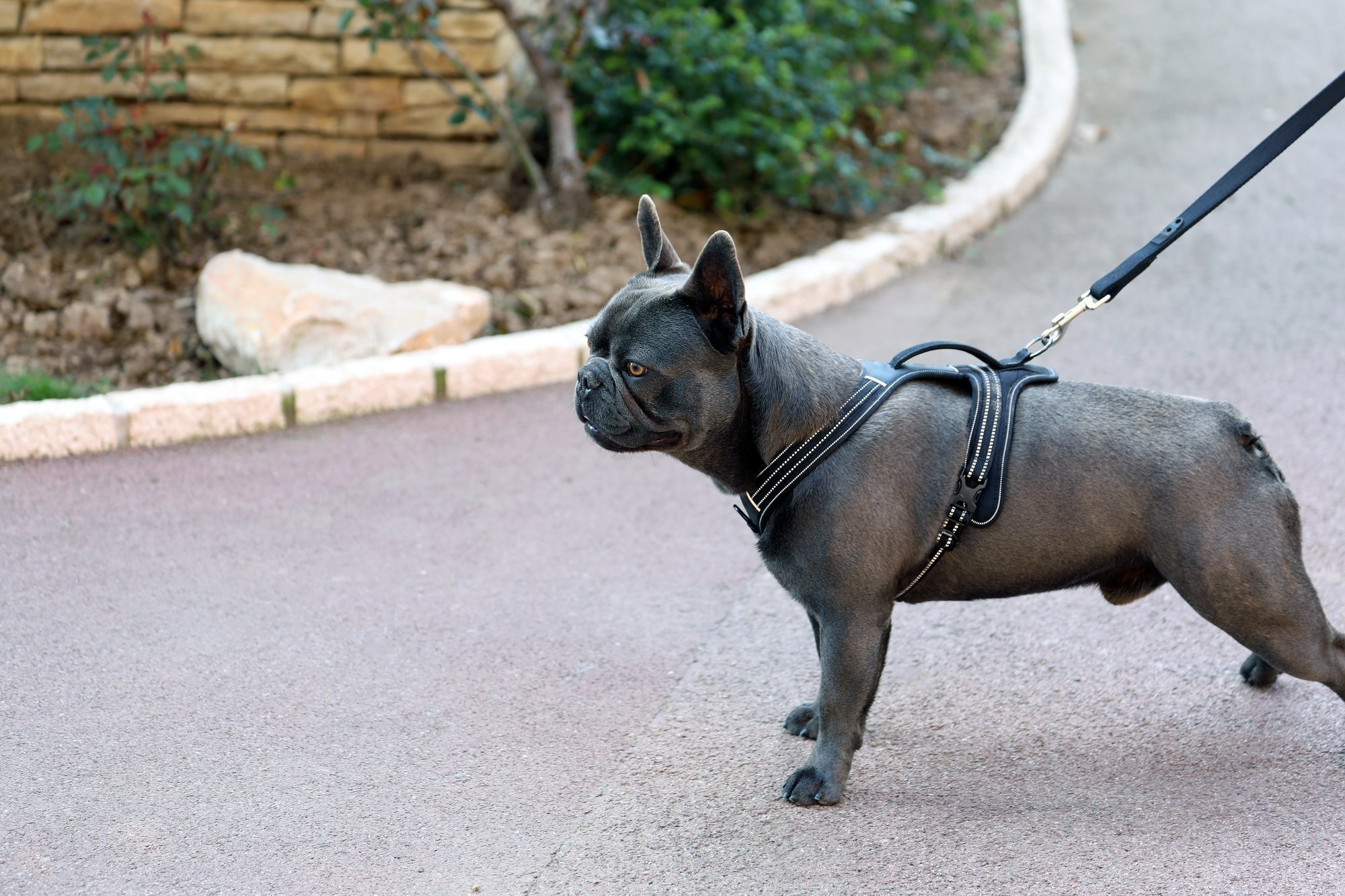 Benefits of Using Pet Harness For Outdoors