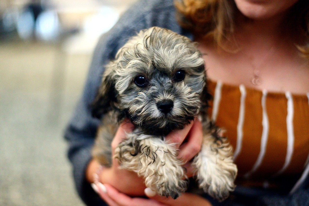 Essential Pet Supplies for New Pup Parents Saving Guide