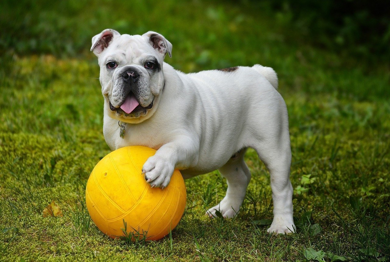 5 Great Benefits of Having a Dog Fence