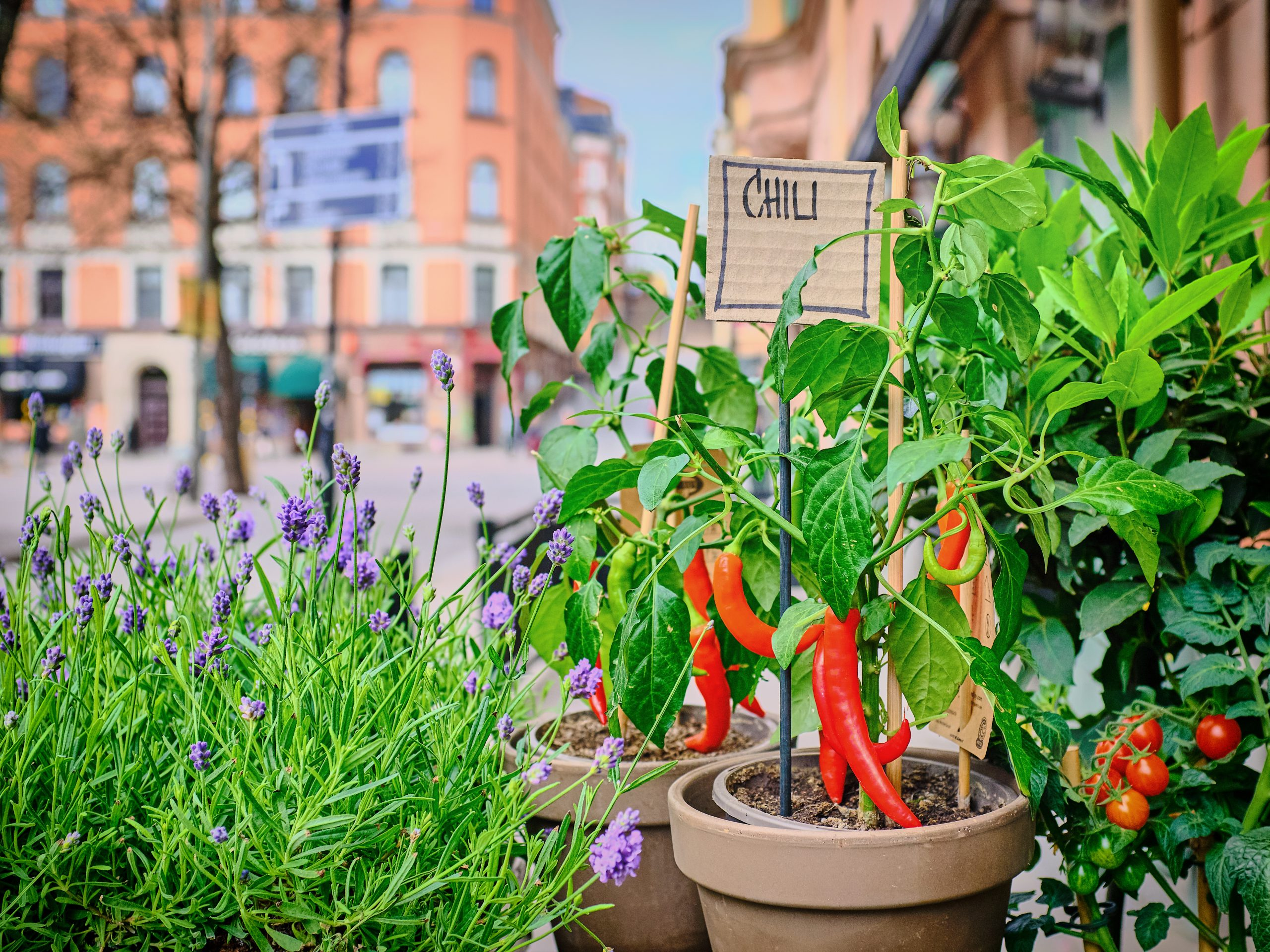 Gardening For Beginners: Proper Ways To Maintain Your Backyard Plants