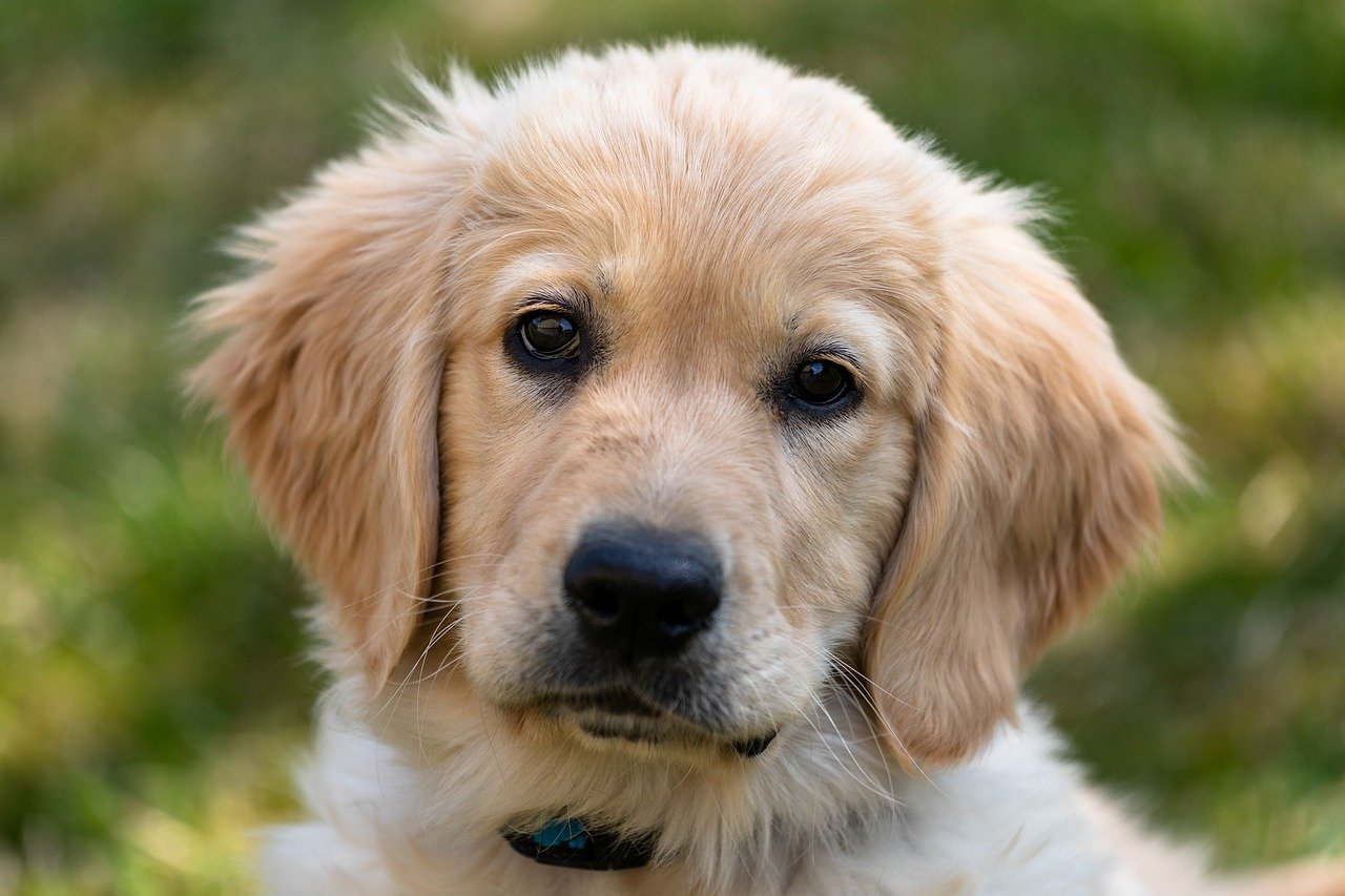 Top 5 Easy to Train Dog Breeds