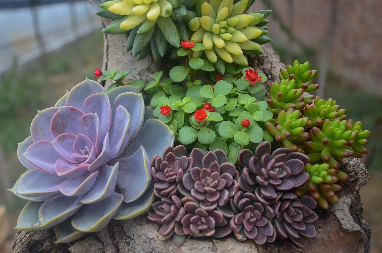 Can Succulents Grow Outdoors Tips and Tricks to Landscaping with Succulents