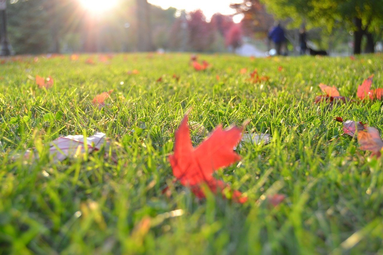 Tips to Prepare Your Lawn for This Fall