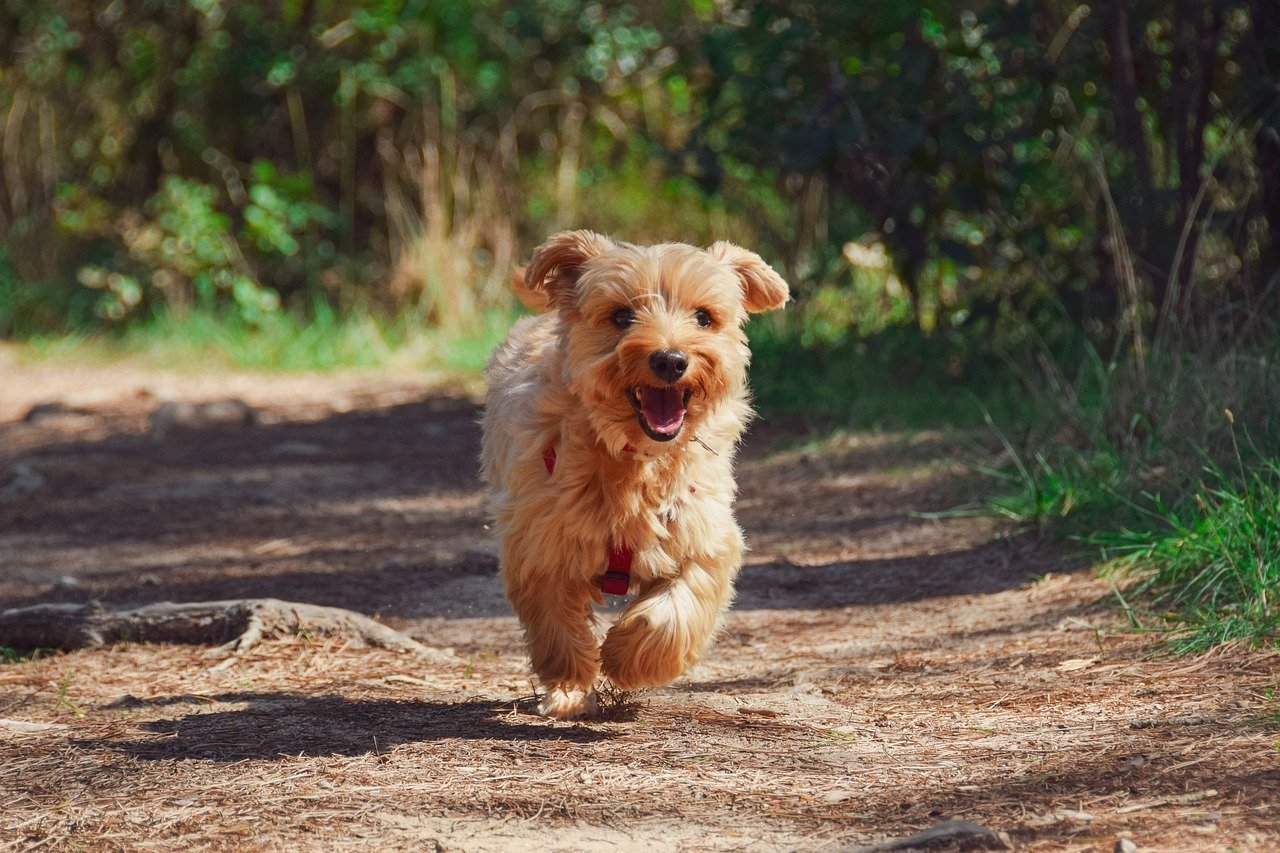 3 Important Things to Remember When Out and About With Your Dog
