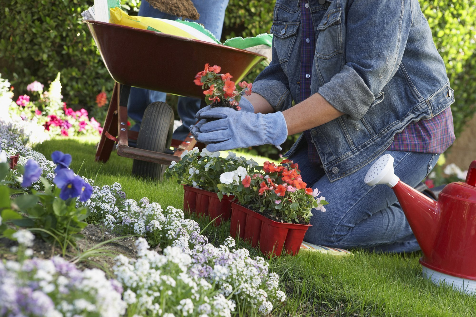 6 Ways to Protect Your Garden