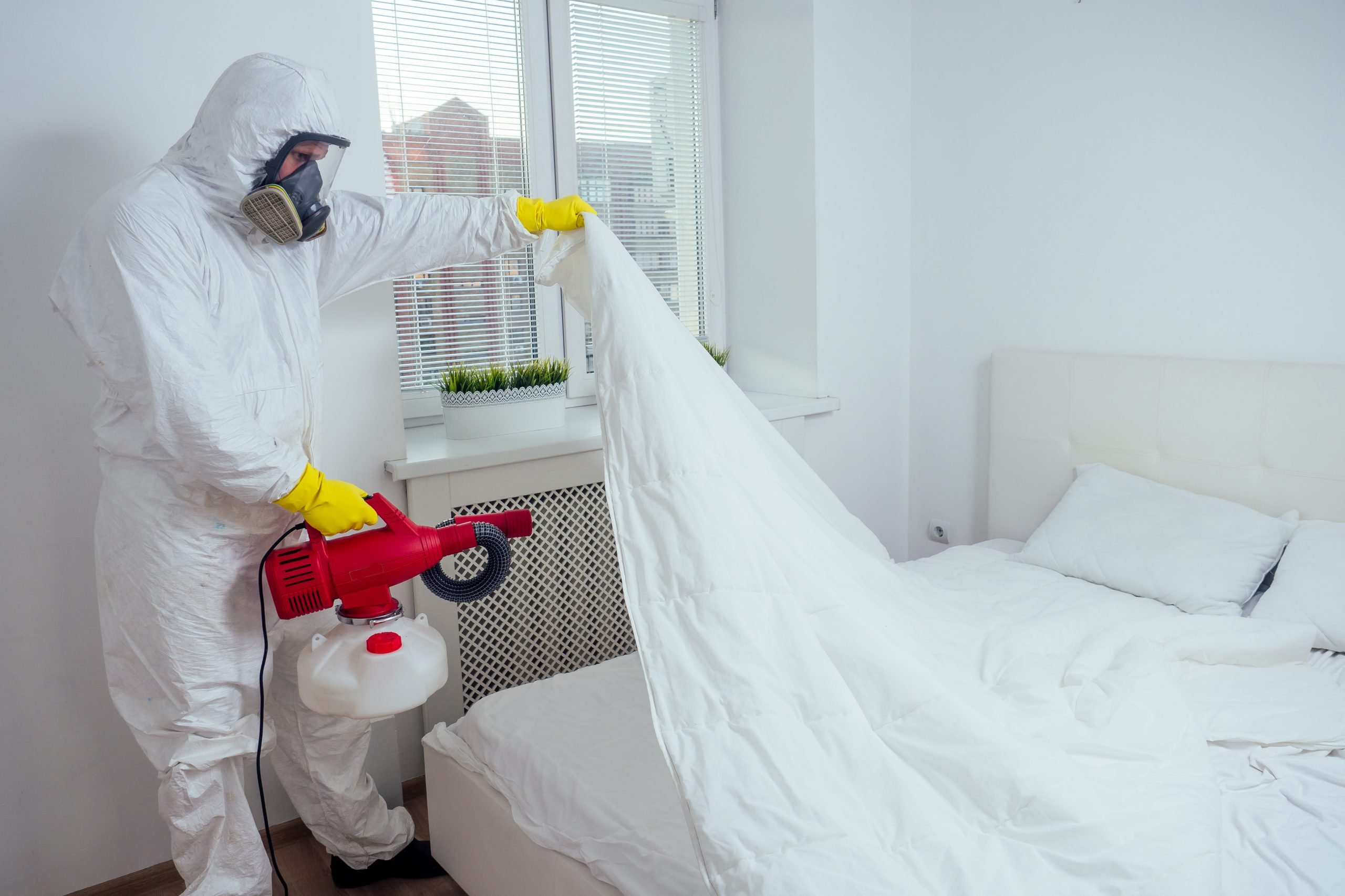 Why You Should Hire An Expert Exterminator To Get Rid Of Pests In Your Home