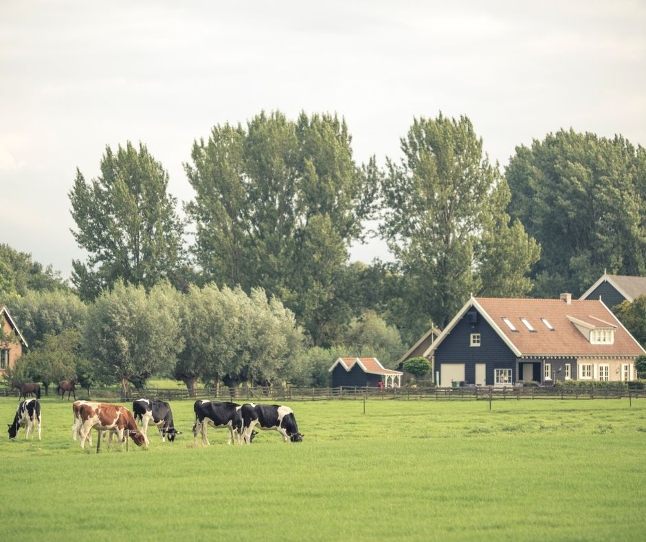 Pastoral and Country Living: Pros and Cons