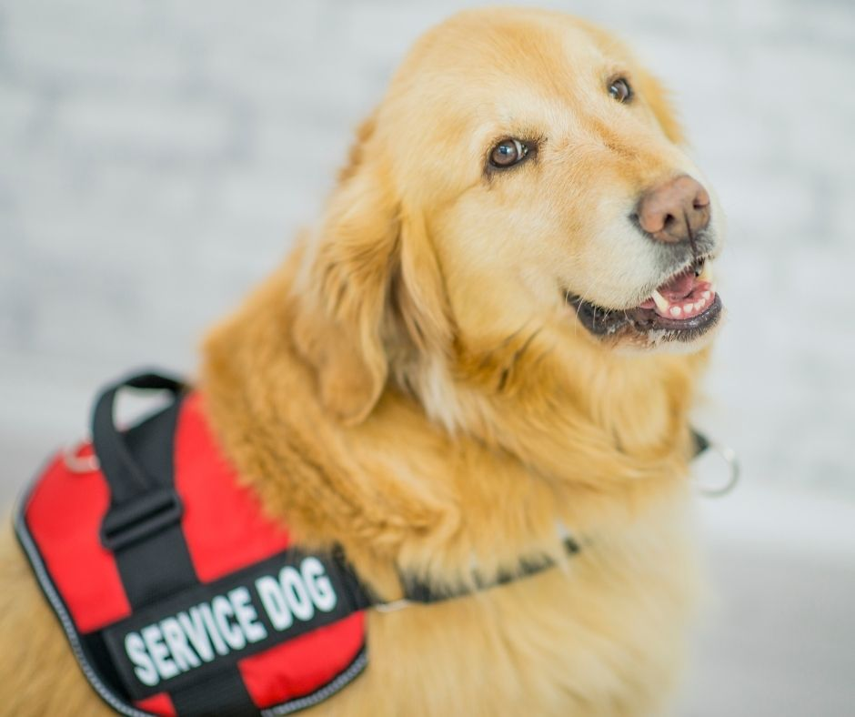 Preparing to Bring Your Service Dog Home