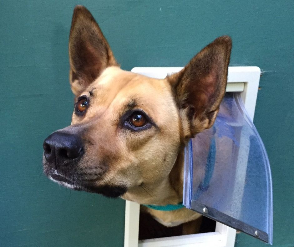 Here Are 6 Ways to Secure Pet Doors