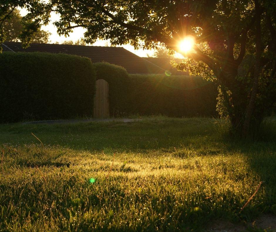 How To Make Your Backyard Look Beautiful