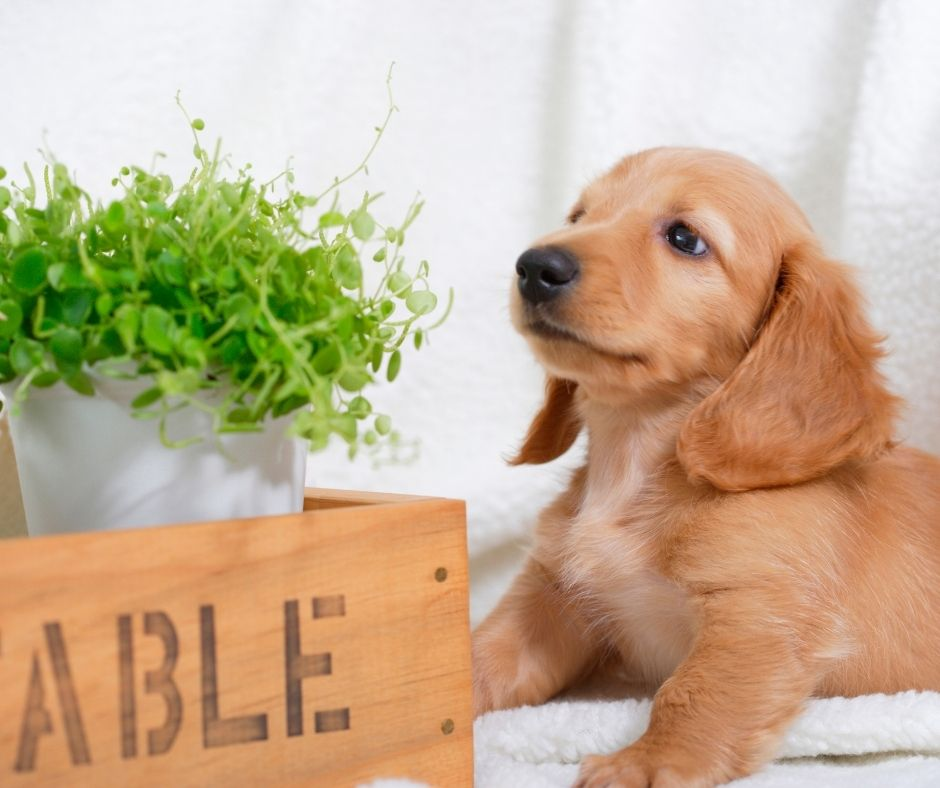 How To Make Your House Dog-Friendly