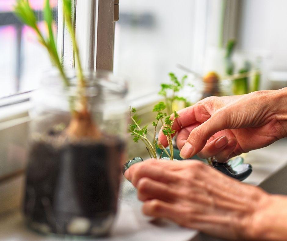 Best Ways To Enjoy Gardening When You Don't Have A Garden