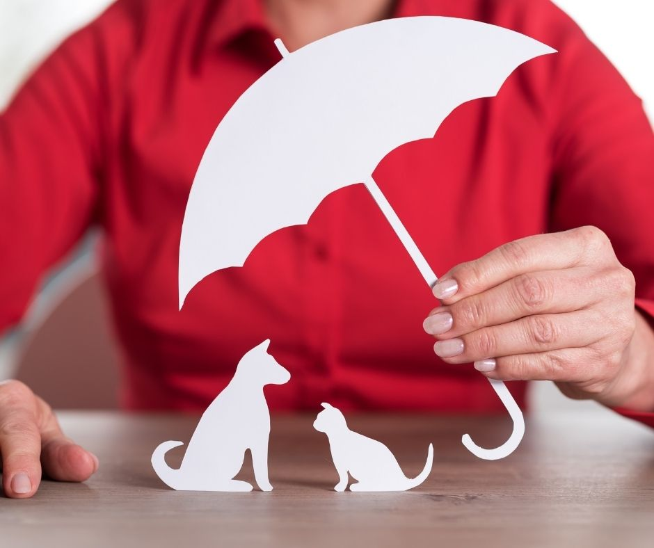 Is Pet Insurance Necessary_