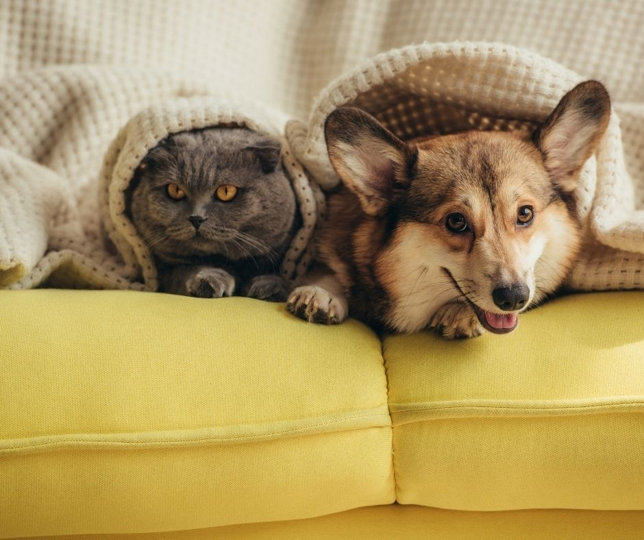 How to create a Pet friendly home