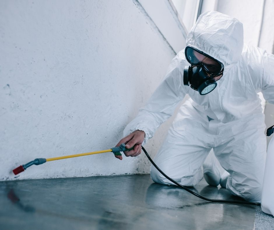 Opting for Professional Pest Control Service? Benefits of Pest Control