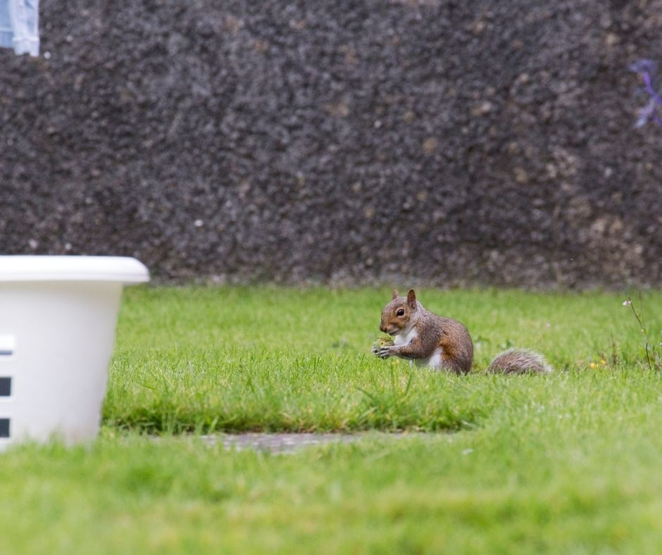 Which Wildlife Pests Are Most Likely to Destroy Your Garden_