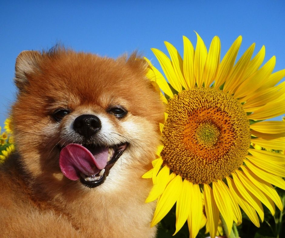 4 of the Safest Flowers for Dogs You Can Buy or Grow