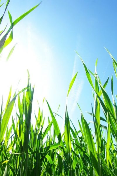 Benefits To Investing In Liquid Aeration for Your Lawn This Summer