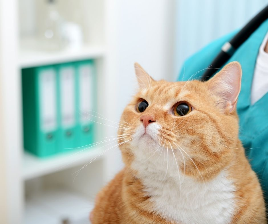 Does Your Cat Need to Take Vitamins Simple Ways to Find Out