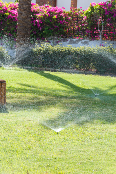 5 Tips For Watering Your Lawn