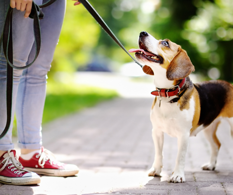 Dog Care 101: How Dog Leashes Can Help Your Furry Friend