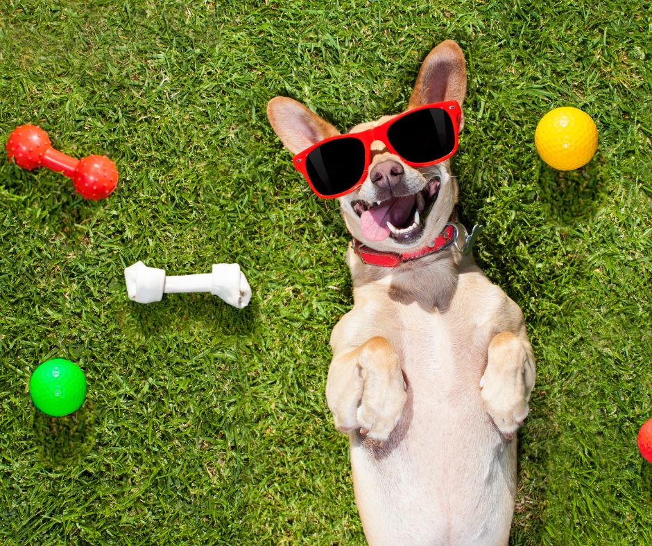 How to Keep Your Dog Happy Always
