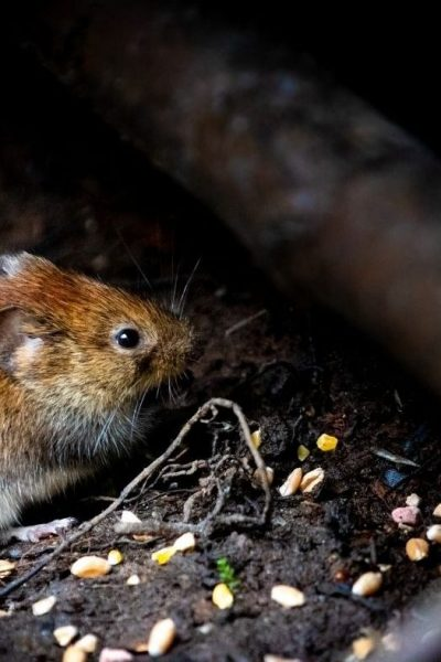 Top Five Rodent Control Long Island Methods