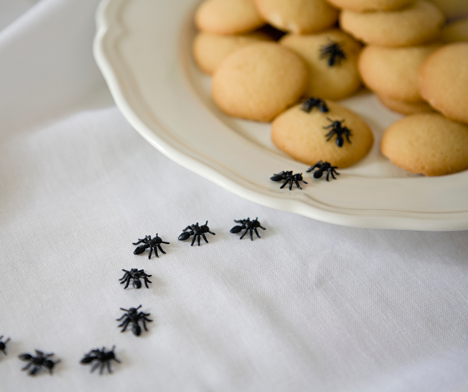 Get Rid of Ants and Enjoy a Cleaner Home in 3 Simple Steps