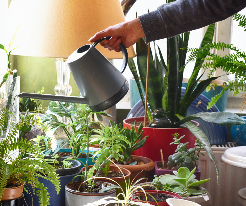 Positivity, Hope & More – 5 Reasons To Bring A Plant Home Today