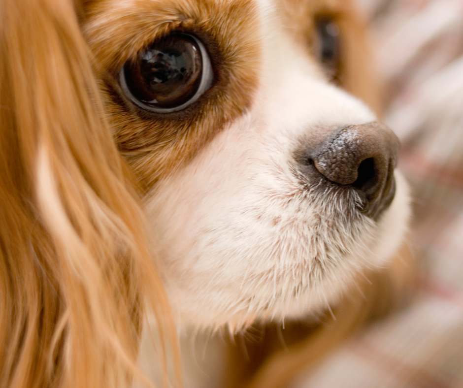 The 5 Best Dog Breeds For Small Homes