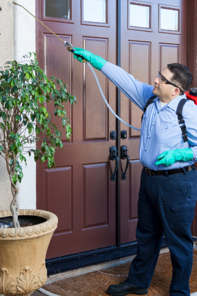 What You Need To Do To Get Rid of a Home Pest Infestation Quickly